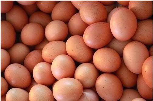 cara bisnis telur