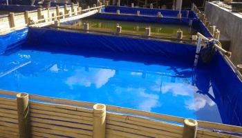 bisnis ikan nila di kolam