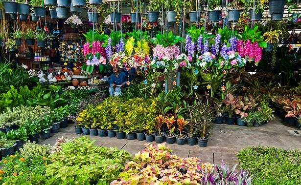panduan bisnis tanaman hias