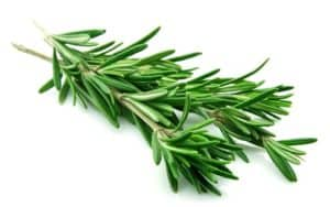 Daun Rosemary untuk Kolesterol